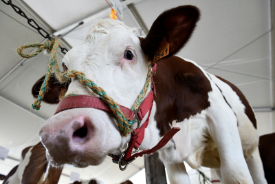 Instead of Reengineering Cows, Just Eat Less Meat