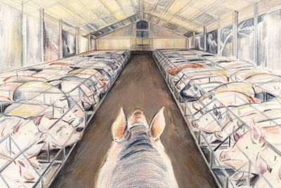 Illustration by Sally Deng Indoor Pig farm